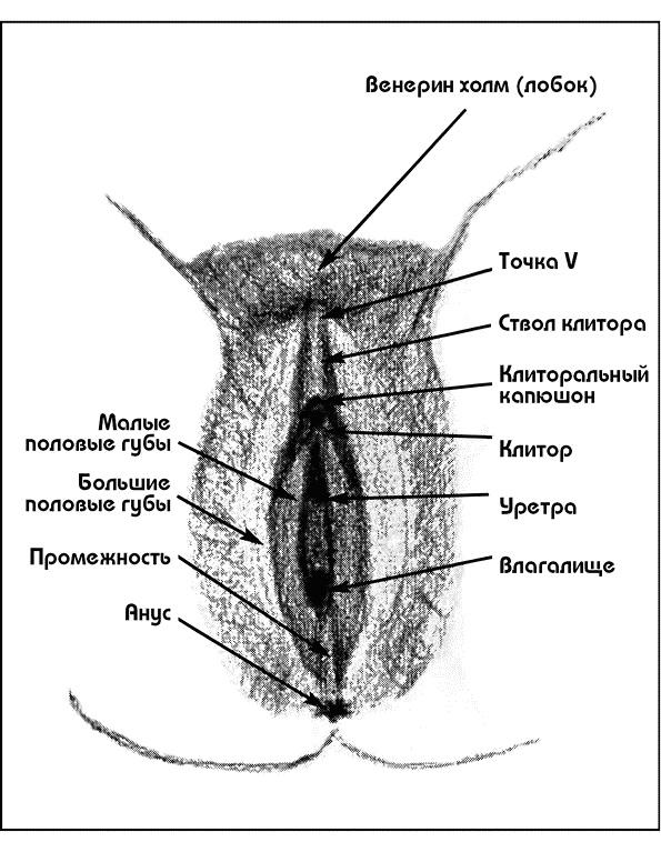 Оргазмы женщин и клиторок 4